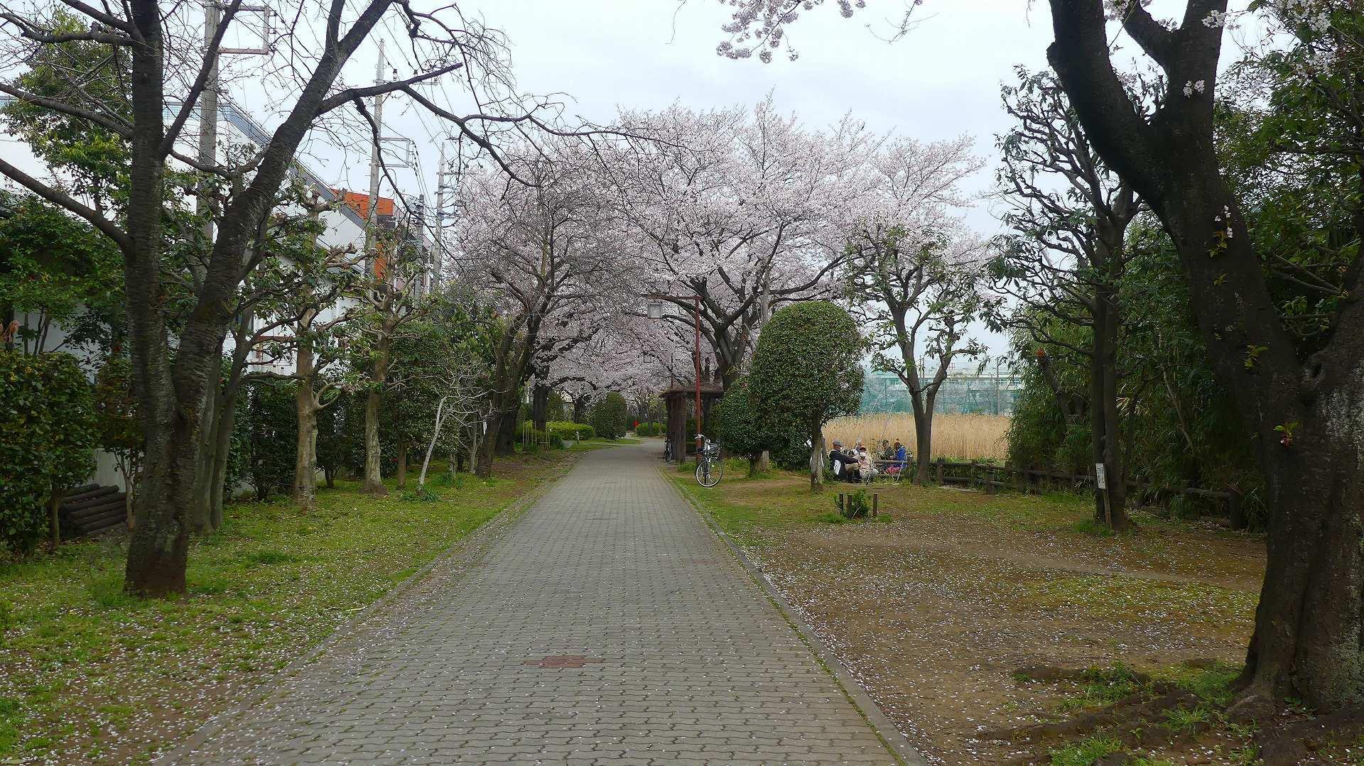 季節がくれば花は咲く_a0185081_11341940.jpg