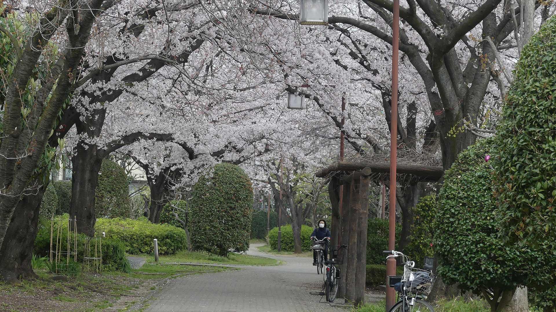 季節がくれば花は咲く_a0185081_11364451.jpg