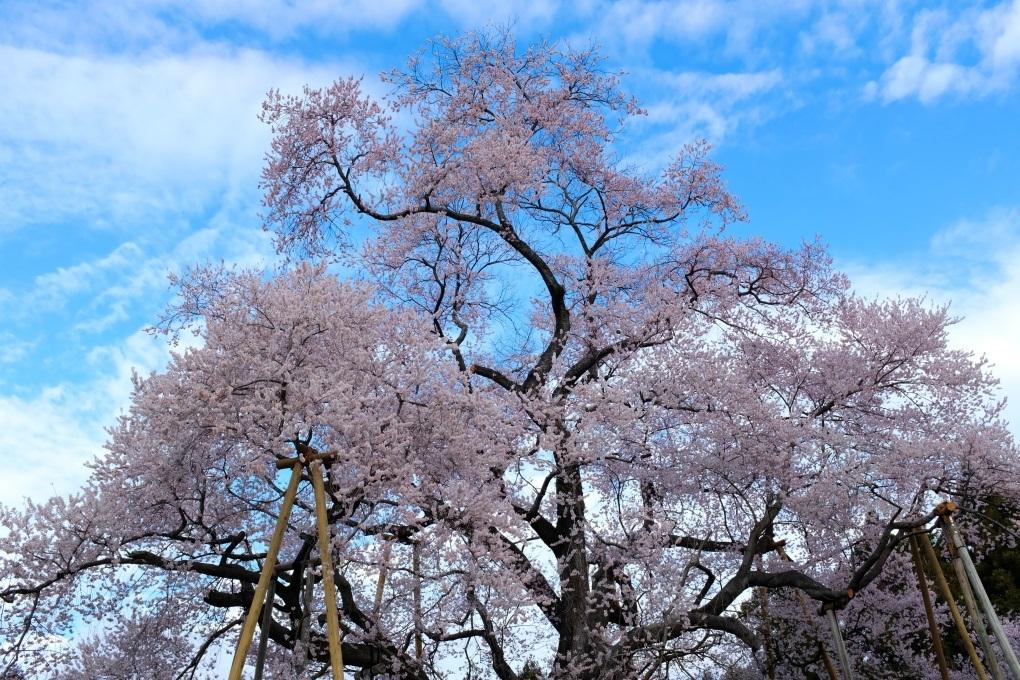 矢祭町「戸津辺の桜」&水郡線 <1> 2020・03・28_e0143883_11273479.jpg