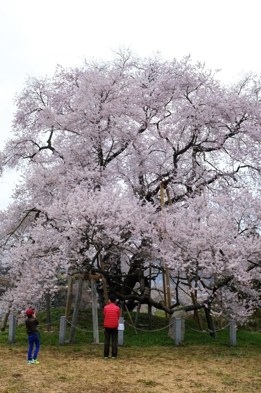 矢祭町「戸津辺の桜」&水郡線 <1> 2020・03・28_e0143883_11283764.jpg