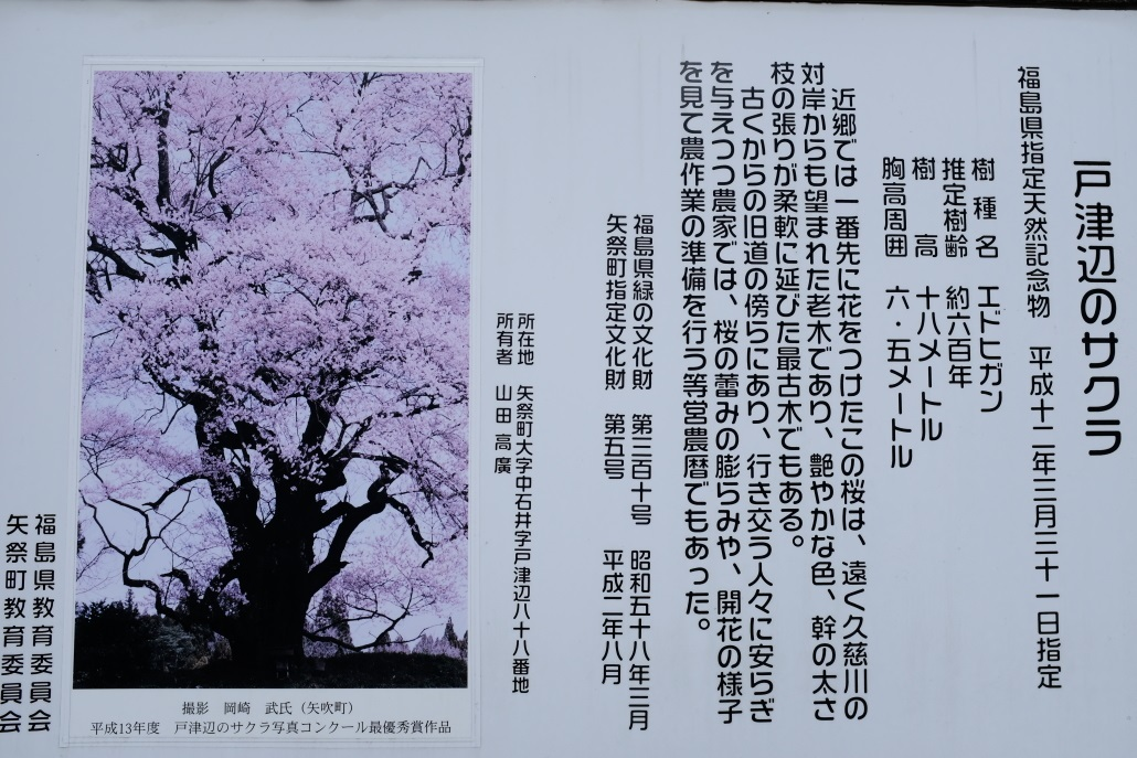 矢祭町「戸津辺の桜」&水郡線 <1> 2020・03・28_e0143883_12011680.jpg