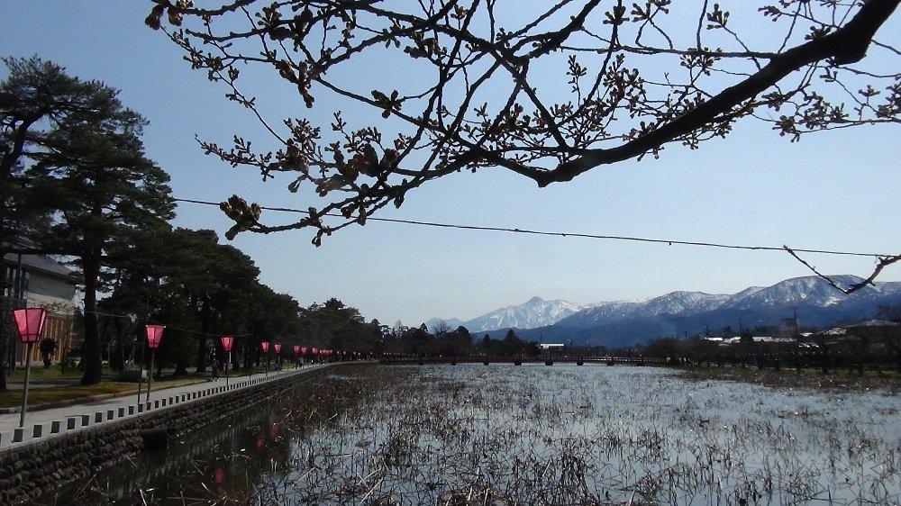 高田城址公園の桜!_e0065084_13594588.jpg