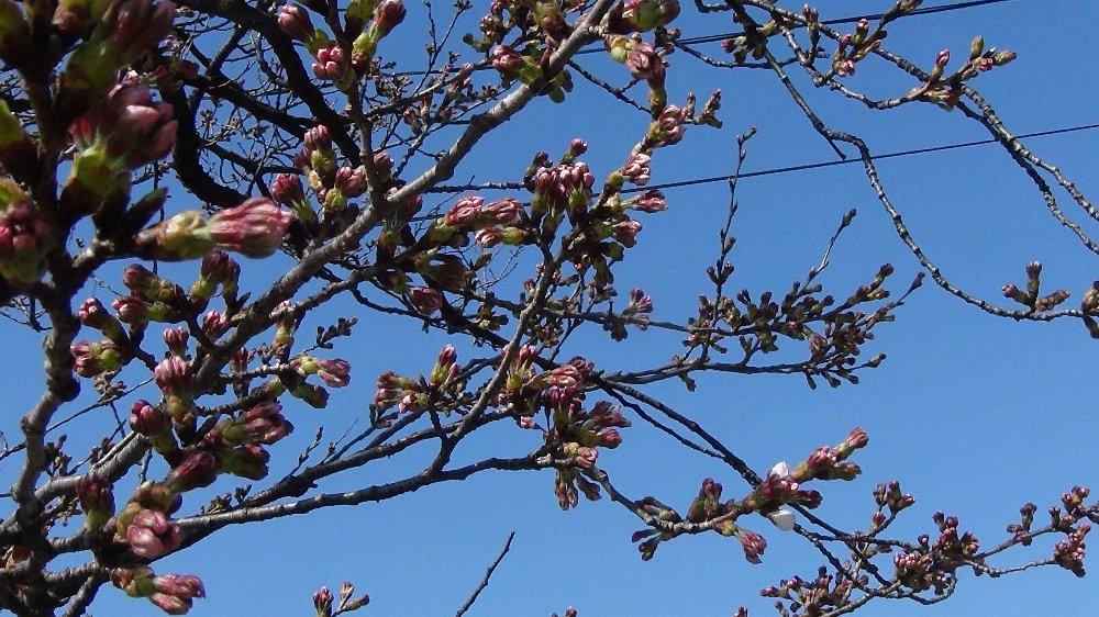 高田城址公園の桜!_e0065084_1401732.jpg