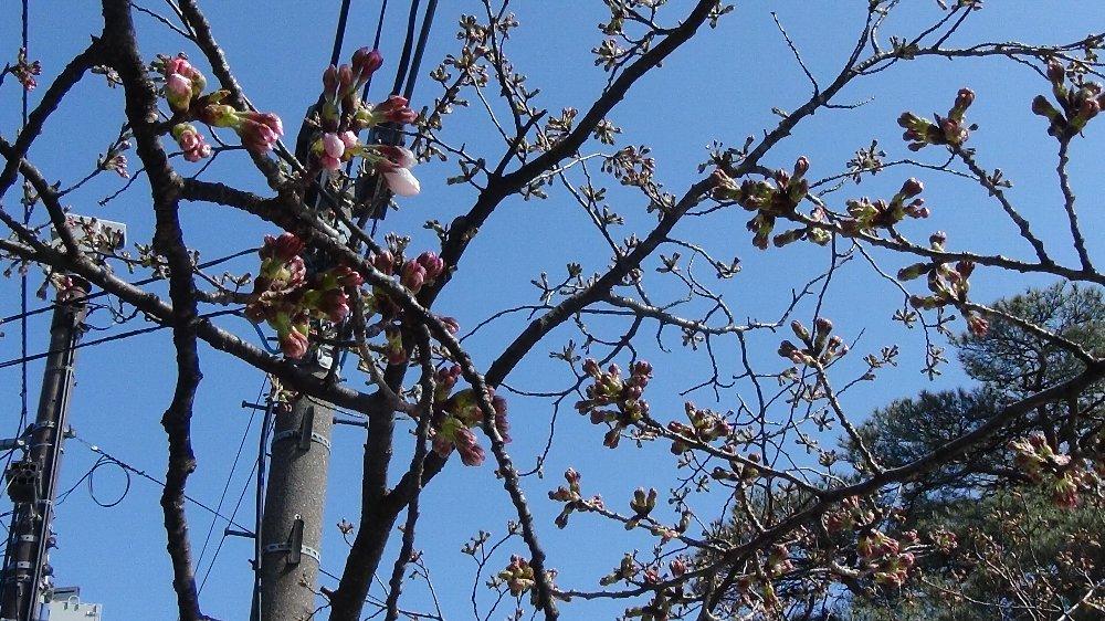 高田城址公園の桜!_e0065084_14053.jpg