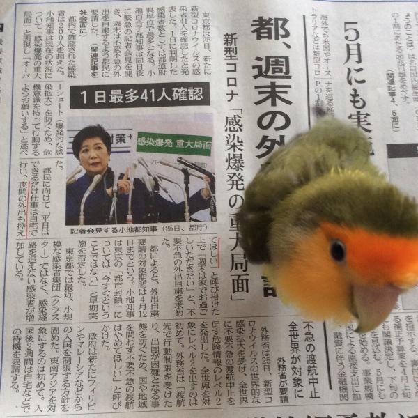 さっぽろペンギンコロニーin 東京2020終了致しました。_d0123492_10235529.jpeg