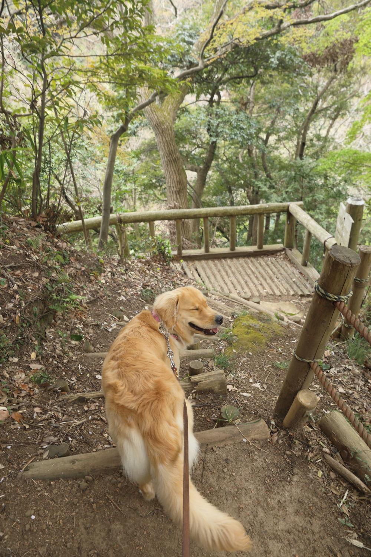 鎌倉の海と山散歩♪_b0275998_15005461.jpg