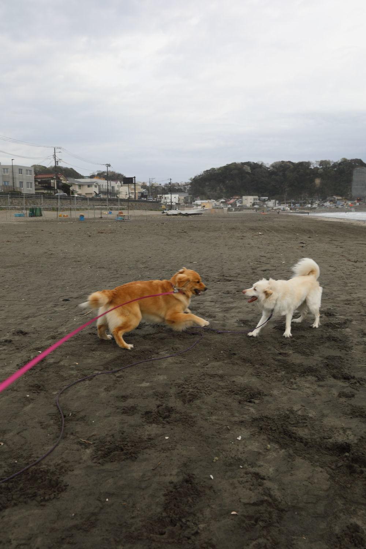 鎌倉の海と山散歩♪_b0275998_15083513.jpg