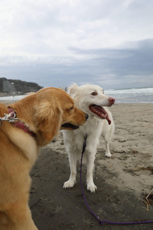 鎌倉の海と山散歩♪_b0275998_15085224.jpg