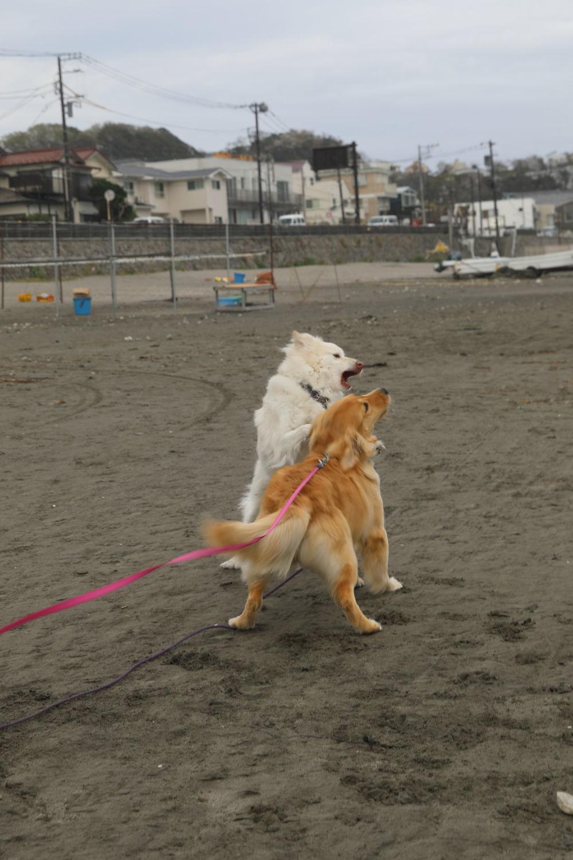 鎌倉の海と山散歩♪_b0275998_15321831.jpg
