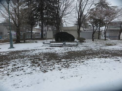 重文本館の昼下がり、「彼岸過ぎまで七雪」2020.3.29_c0075701_14164430.jpg