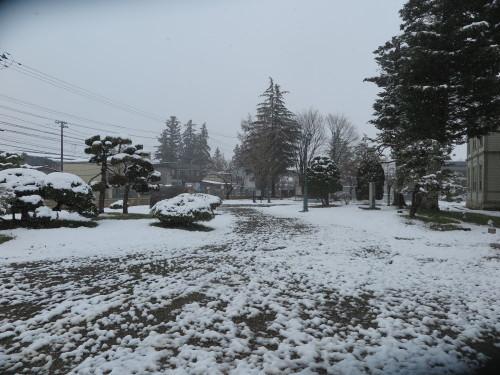 重文本館の昼下がり、「彼岸過ぎまで七雪」2020.3.29_c0075701_14191827.jpg