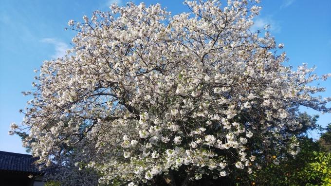 春うらら   1_b0239402_16303531.jpg