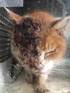 追記しました:負傷収容の茶白の猫さん_f0242002_20324929.jpg