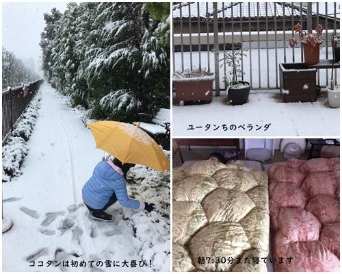 雪が降る ・テスト配信 ・畑 ・マスク騒動_c0051105_11301660.jpg