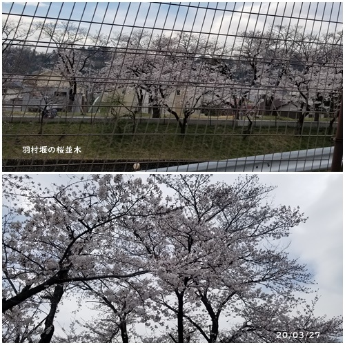 雪が降る ・テスト配信 ・畑 ・マスク騒動_c0051105_14214989.jpg