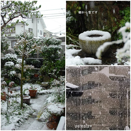 雪が降る ・テスト配信 ・畑 ・マスク騒動_c0051105_15481663.jpg