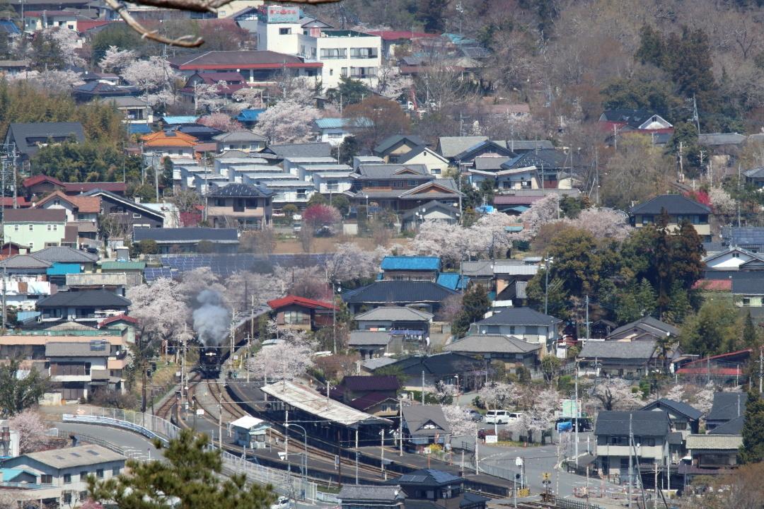 長瀞から上長瀞へ続く桜並木 - 2019年・秩父鉄道 -_b0190710_19000061.jpg