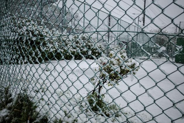 2020.03.29 春の雪_a0390712_13433302.jpg