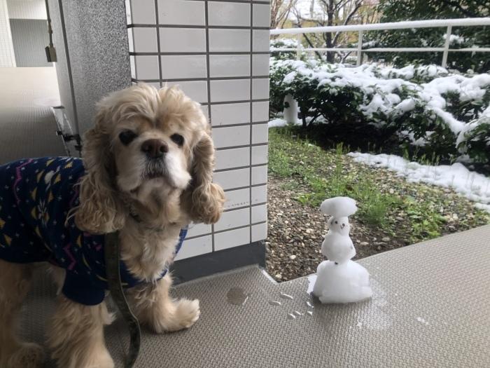 雪降りましたさん_b0067012_18123665.jpeg