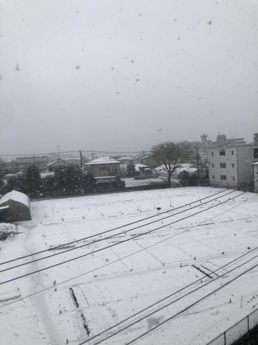 雪降りましたさん_b0067012_18152842.jpeg