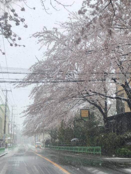 雪降りましたさん_b0067012_18183813.jpeg