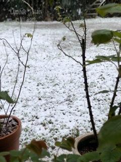 Nieve en la plena primavera_e0365614_21272400.jpg