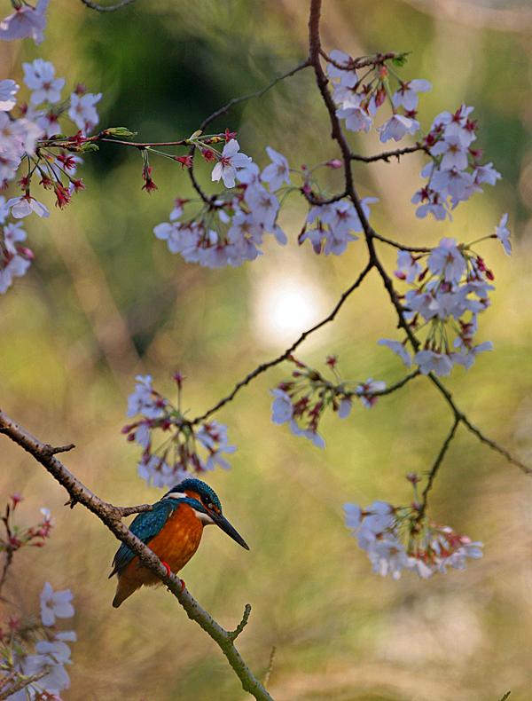 春爛漫。_b0044115_02120811.jpg