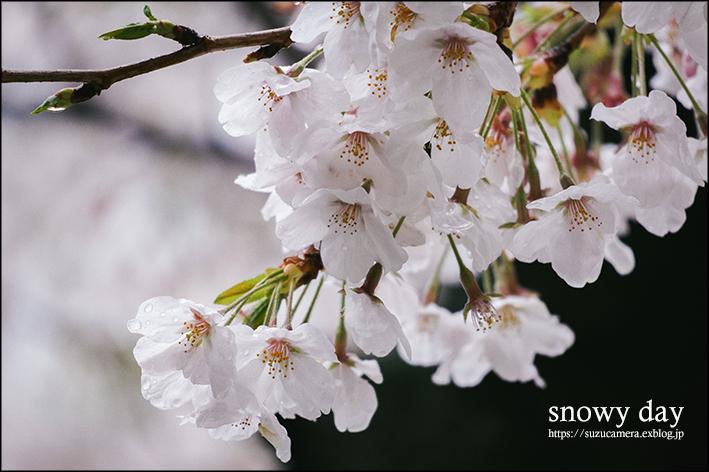 3月の雪_f0100215_22551521.jpg