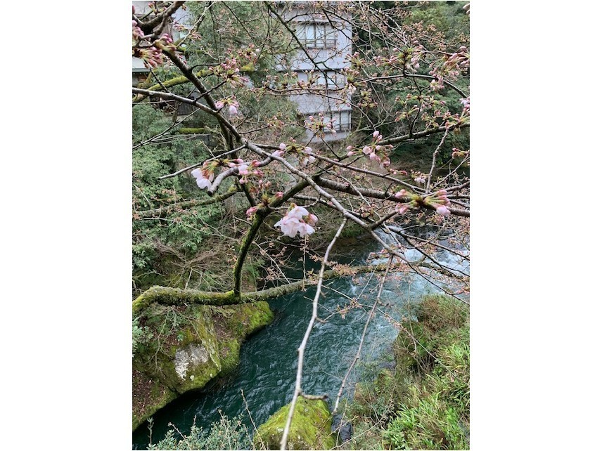 桜咲きました。_c0210517_10155668.jpg