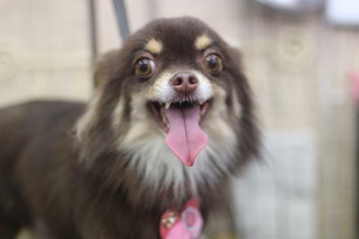 3月25日ご来店のワンちゃんです!!_b0130018_09502197.jpg