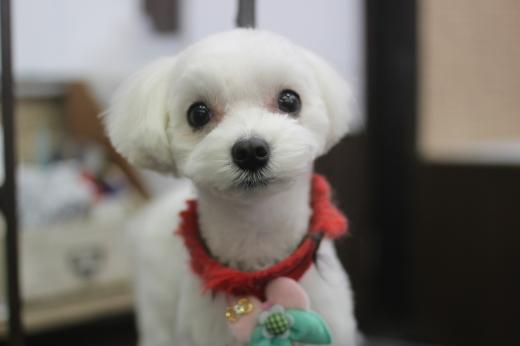 3月25日ご来店のワンちゃんです!!_b0130018_09505182.jpg