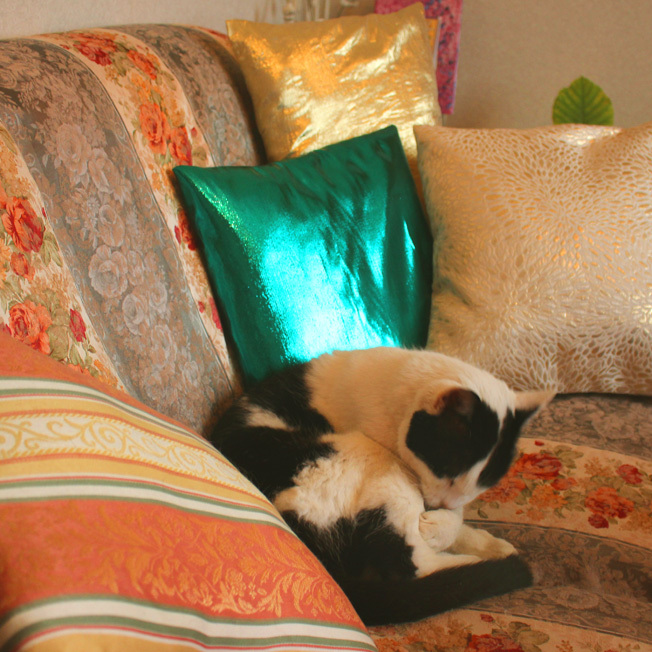 猫の勘_a0329820_16132994.jpg
