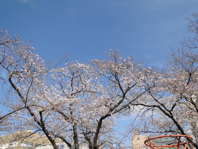 お花見日和_b0200721_15333425.jpg