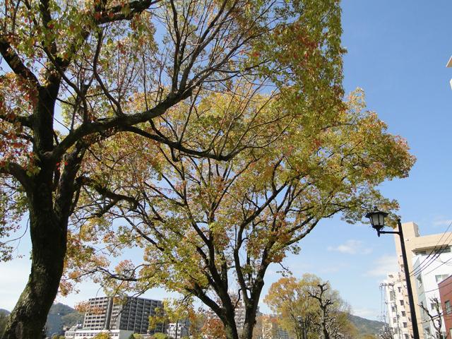 お花見日和_b0200721_15334428.jpg