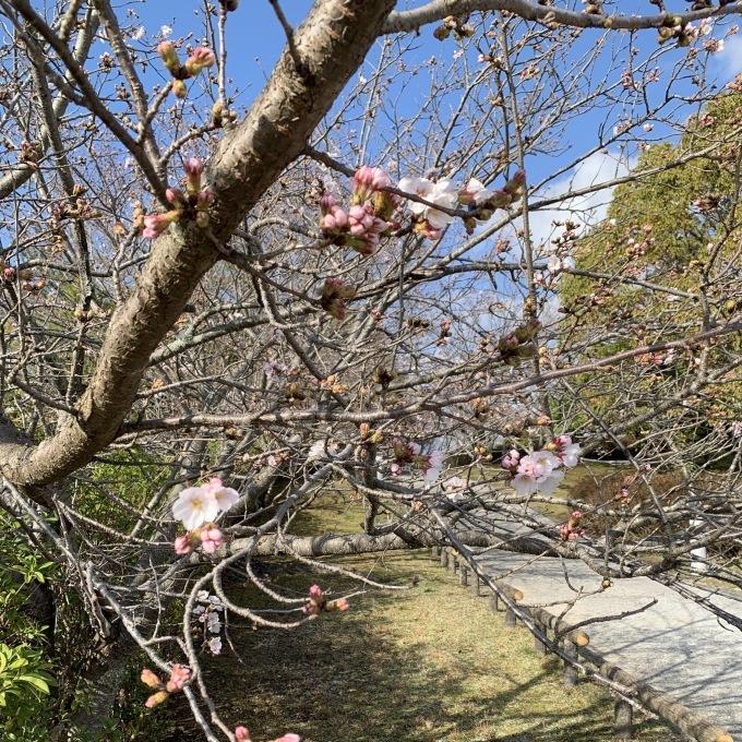 2020.3.29 桜パトロール@本庄レイクパーク_c0211221_19594561.jpeg