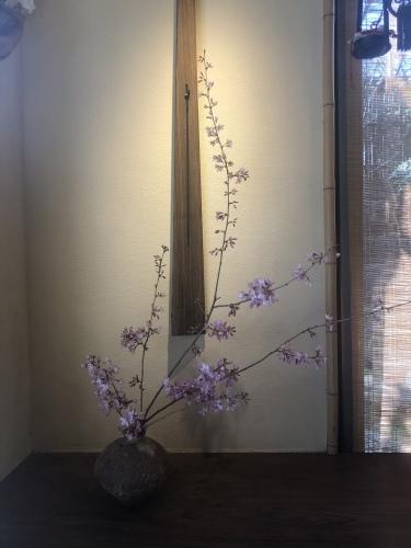 桜の季節に…_a0197730_01154194.jpeg
