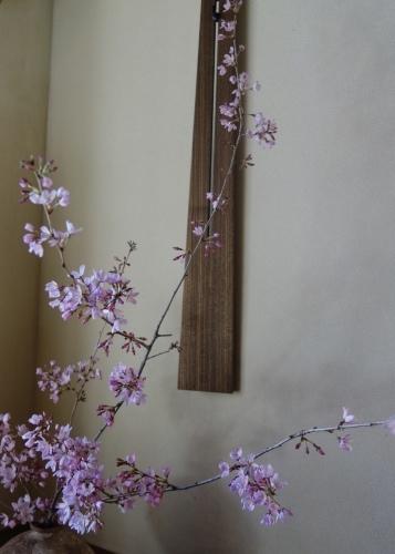 桜の季節に…_a0197730_01160837.jpeg