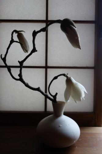 桜の季節に…_a0197730_01170082.jpeg