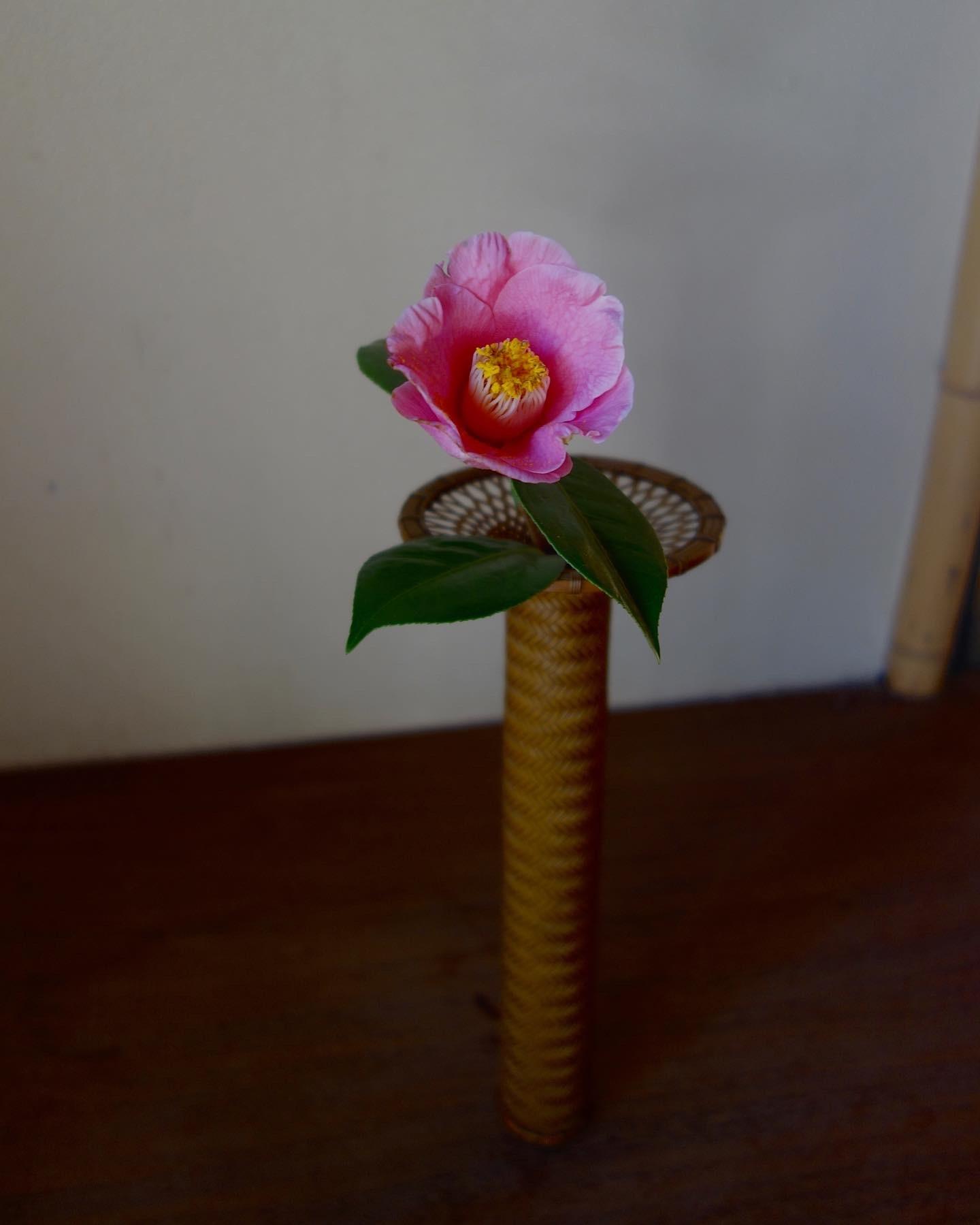 桜の季節に…_a0197730_01173404.jpeg