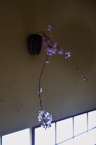 桜の季節に…_a0197730_14351570.jpeg