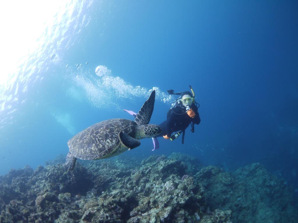 ウミガメと一緒にダイビング~♪_a0189838_12035610.jpg
