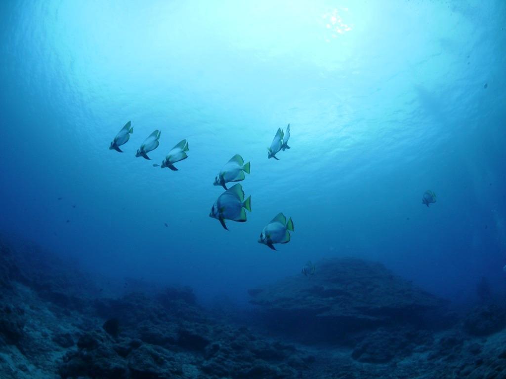 スパーブルーな海へ(^_-)-☆_a0189838_13435596.jpg