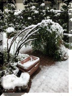 春の雪・・・・・_e0054438_13193218.jpg