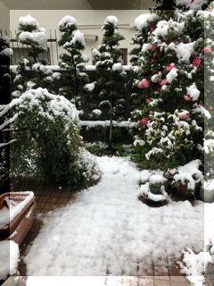 春の雪・・・・・_e0054438_13240419.jpg