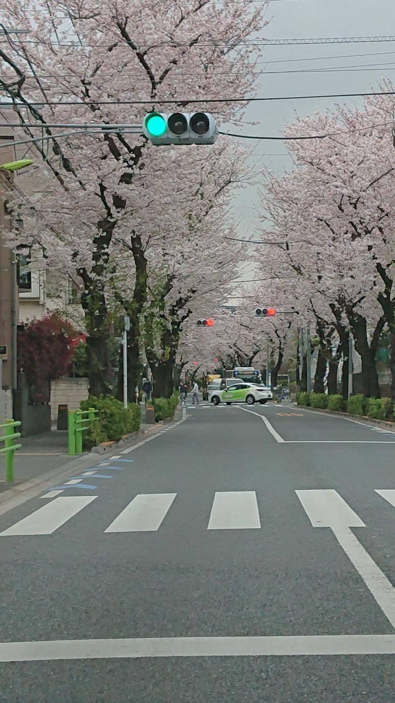 桜、見納め_d0155439_10550839.jpg