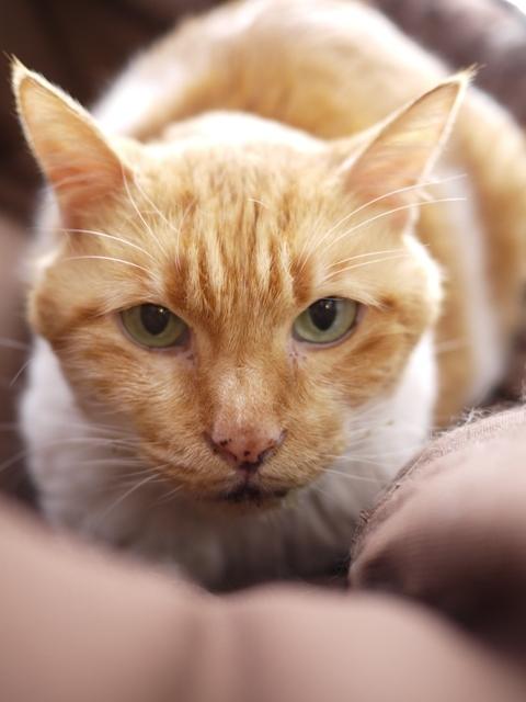 猫のお留守番 喜助くん編。_a0143140_21132301.jpg