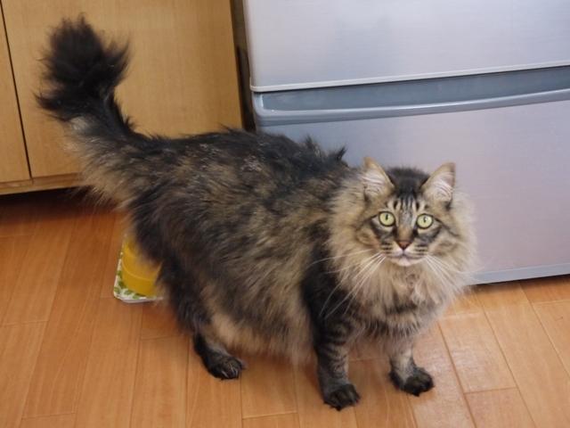 猫のお留守番 諭吉くん編。_a0143140_21180128.jpg