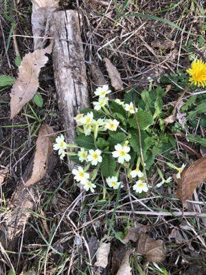 野の花たち_d0136540_06252335.jpg