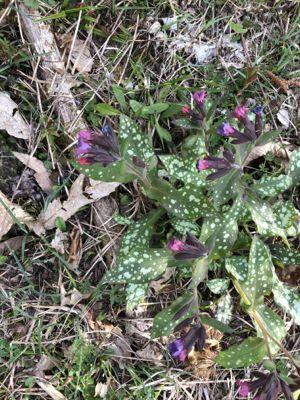 野の花たち_d0136540_06255792.jpg