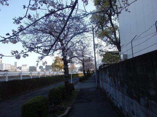 花見をしましょう!_c0038742_10460404.jpg